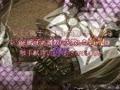 LILITH-IZM07~俺のペット編~ デモムービー